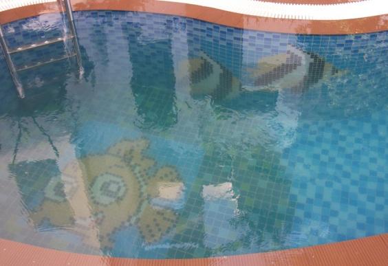 Hồ bơi tư gia anh Sĩ Q. 2